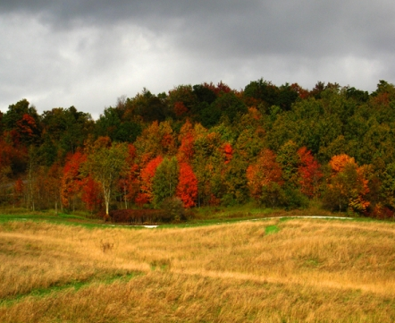 Field during autumn